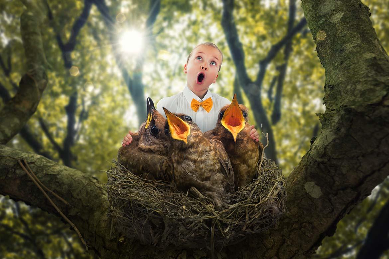 The bird choir